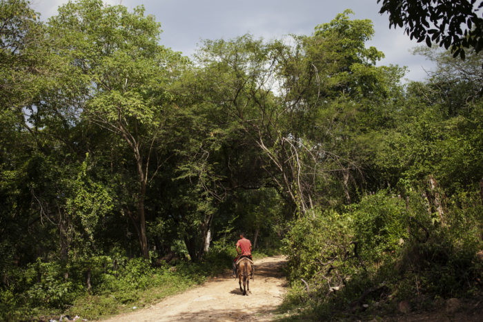 Man on a horse on a path surrounded by forestation