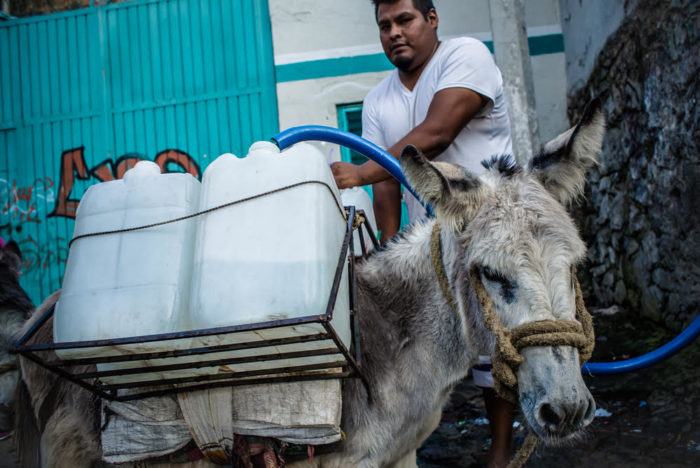 Man loads jugs of water onto donkey