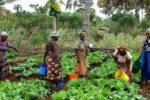 Women working in a field.