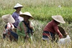 Women farm in field