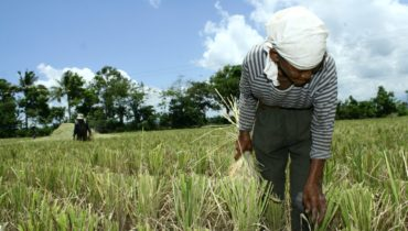 Link to The Role of Women in Creating Climate Resilient Communities: Focus on the Philippines