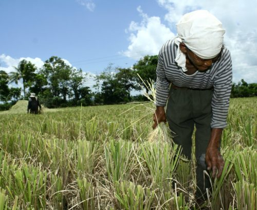 Philippines women farming and climate change