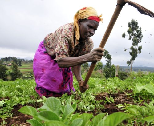 Female farmers are increasingly impacted by climate change