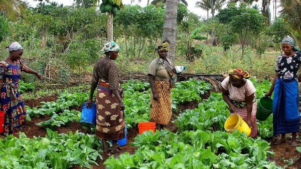 Image of women with buckets of water tending to plants..