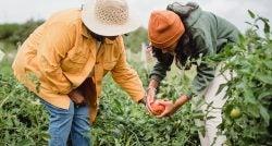 women farming in a field